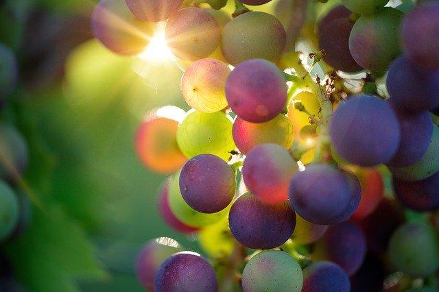 uvas y luz solar 1