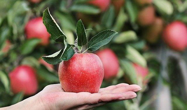 frutas diabéticos mano 1