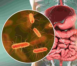intestinal inflamatoria crohn dieta adecuada 1